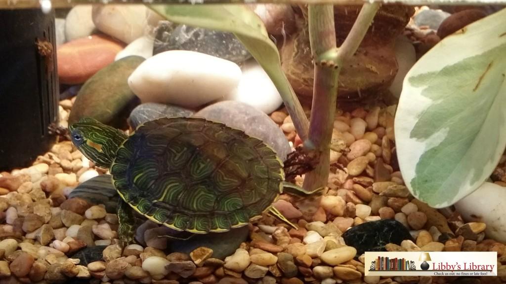 Turtle Tales 1