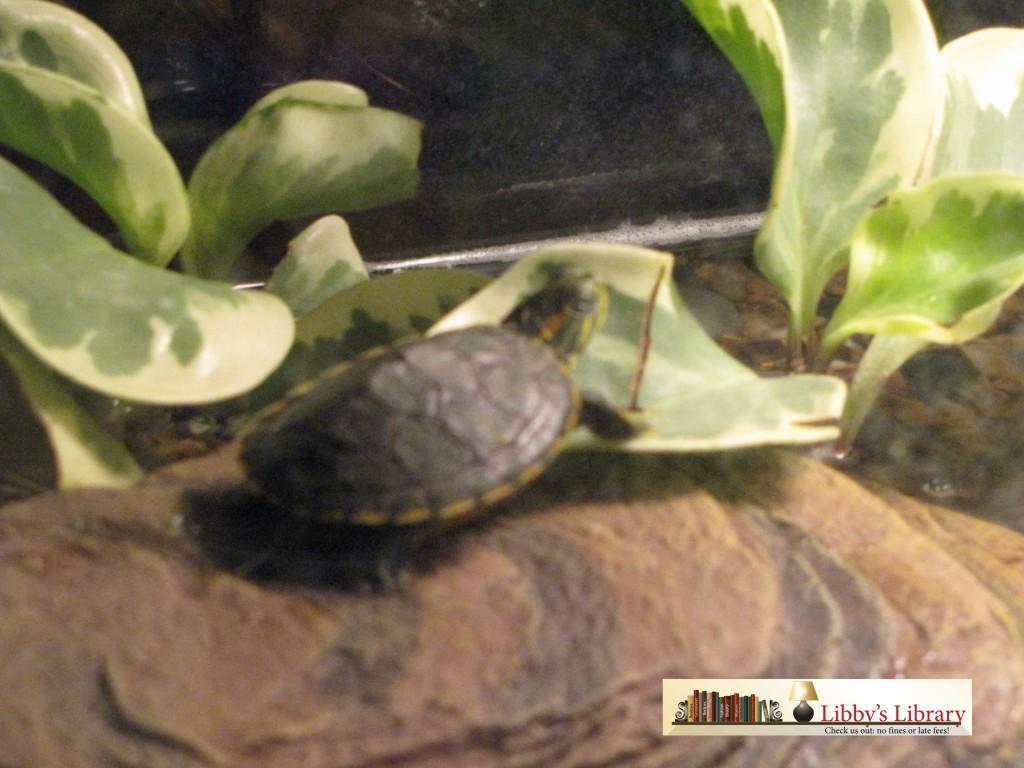 Turtle Tales 3