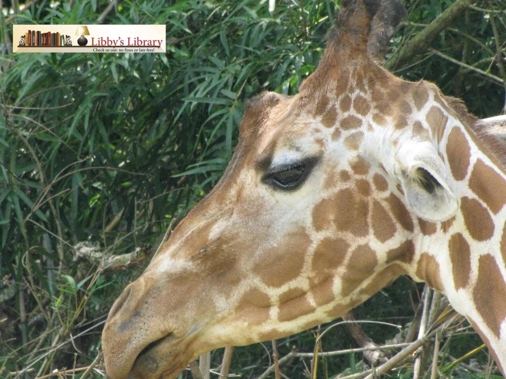 BRZ Giraffe