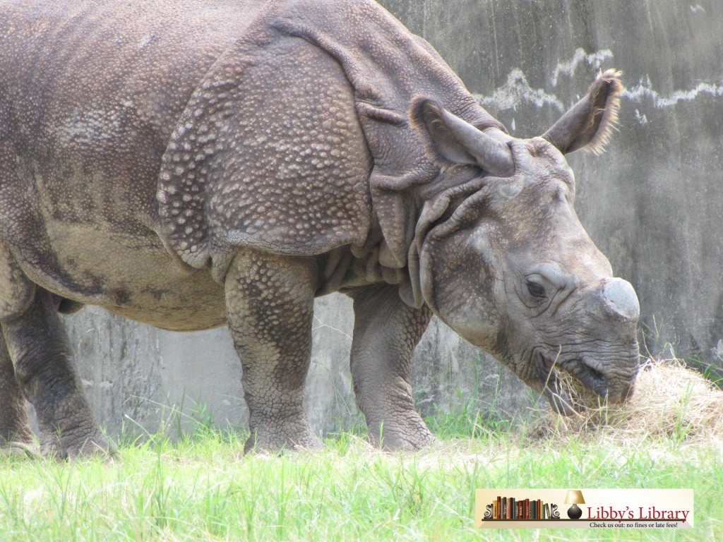BRZ Rhino