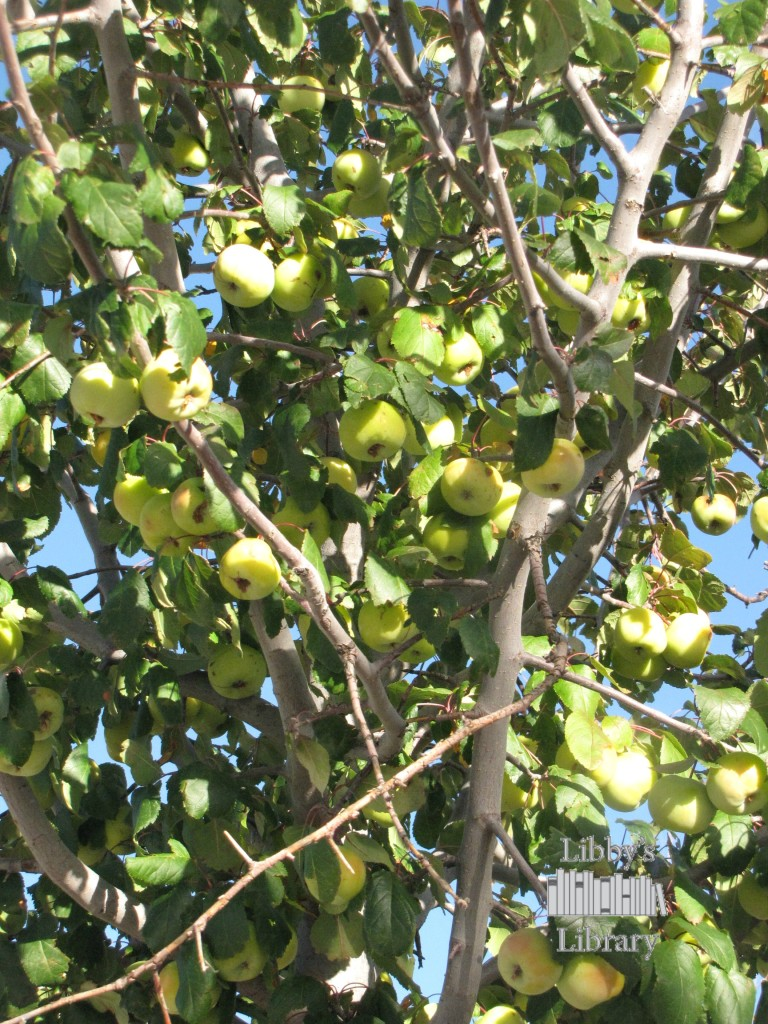 CRACH Fruit trees