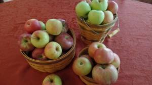 Apples Fresh from the Farm