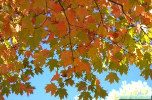 BT Fall Leaves