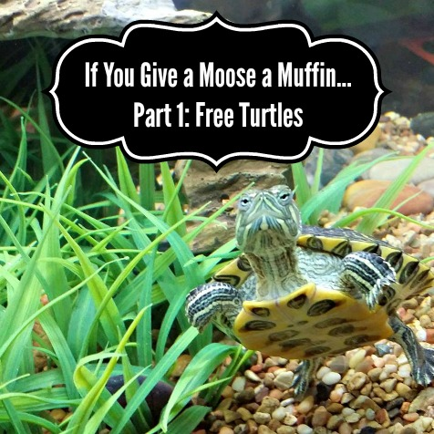 If You Give A Moose a Muffin…Part 1: Free Turtles