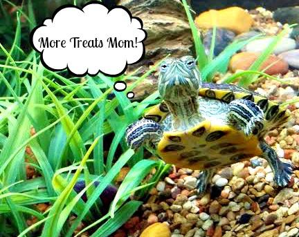 Turtles Treats