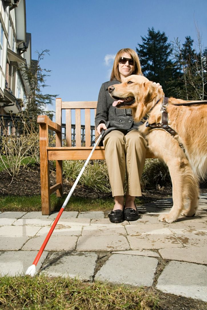 Kansas City Service Dog For Blind