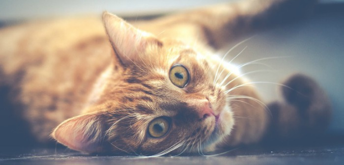 Ten Cat Diseases You Should Know About