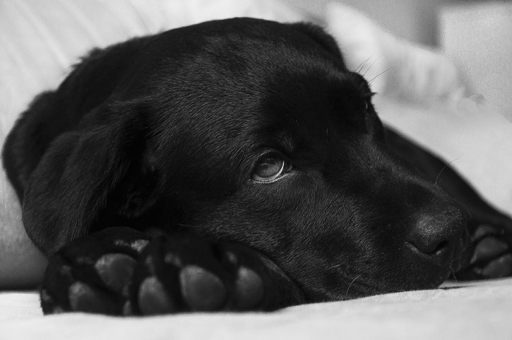 Strange Behaviors To Look Out For In Your Dog
