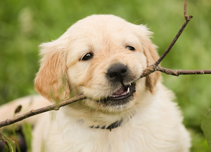 Best In Show: Simple Ways To Improve Your Dog's Behavior