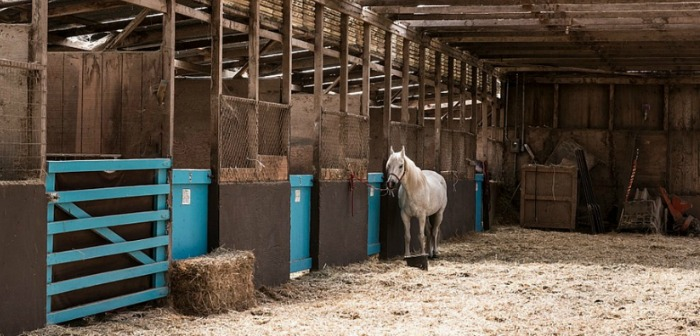 Affordable Barns for Your New Horse