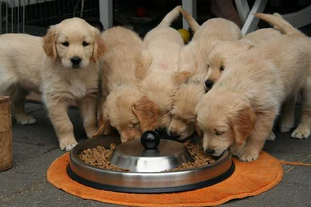 Getting Your Home Ready for a New Puppy