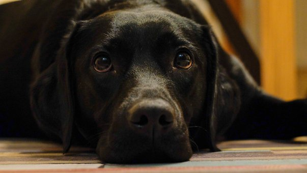 What Every Dog Owner Needs To Know About Separation Anxiety