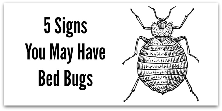 5 Signs You May Have Bed Bugs