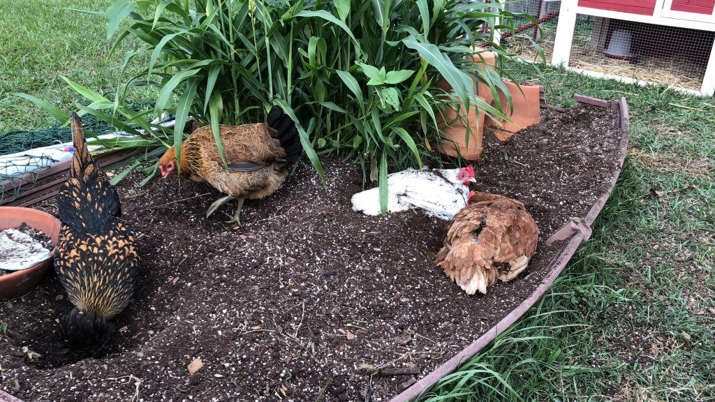 Today on the Funny Farm - Gardening and a New Coop