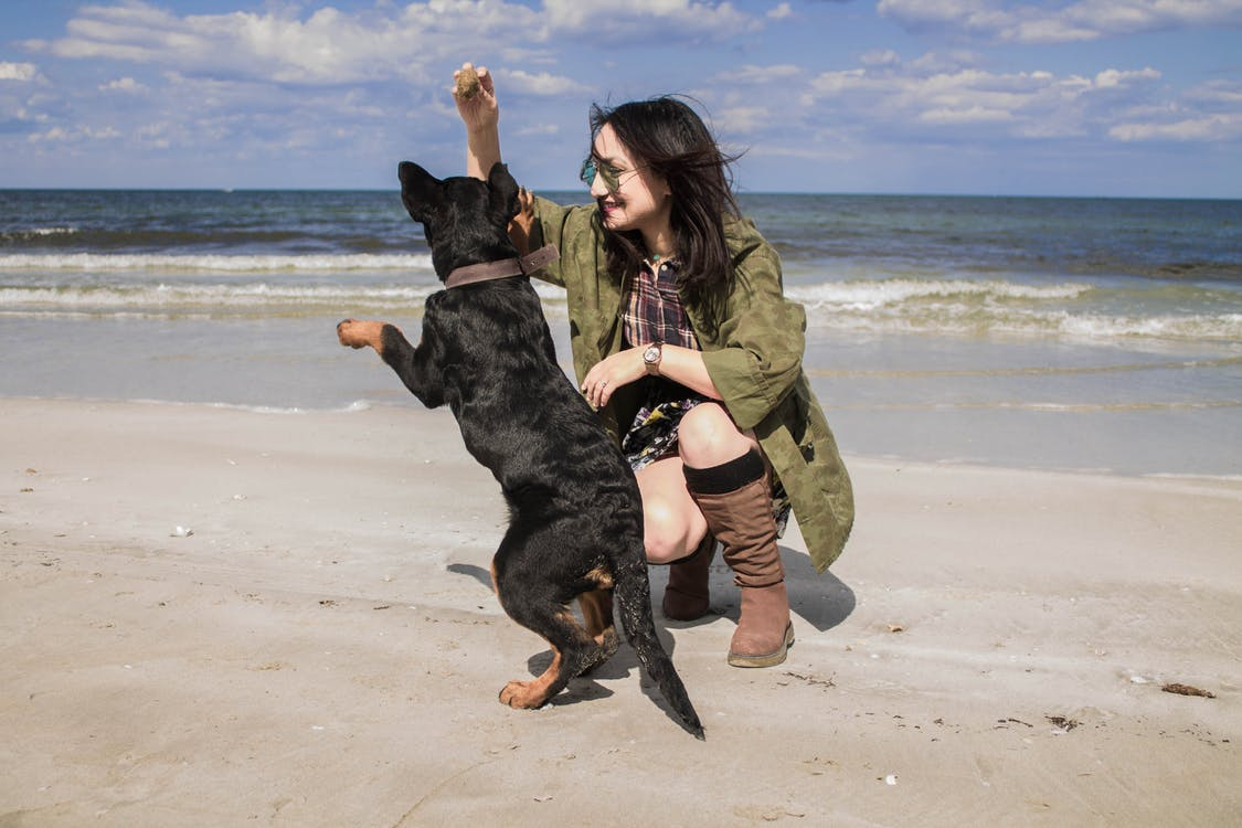 6 Vacation Spots Perfect For Families With Dogs