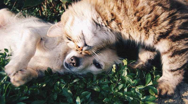 Dog and cat snuggling in the grass - Helping Your Pets Live a Happier, Healthier Life