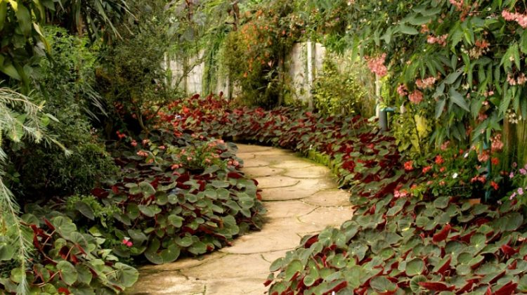 Lush Garden with Pavers - Genius Garden Maintenance Hacks You Need To Know