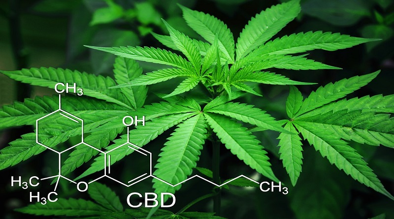 Marijauna Plant with Molecular Formula - What You Should Know about the Real Benefits and Advantages of CBD Oil