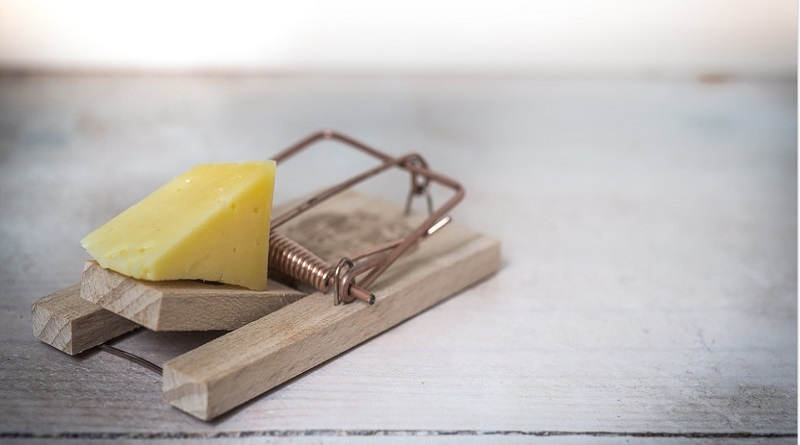 Mouse Trap with Cheese - Top 5 Do-It-Yourself Pest Control Tips For Fall