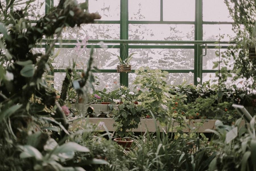 Greenhouse in winter - Your Garden