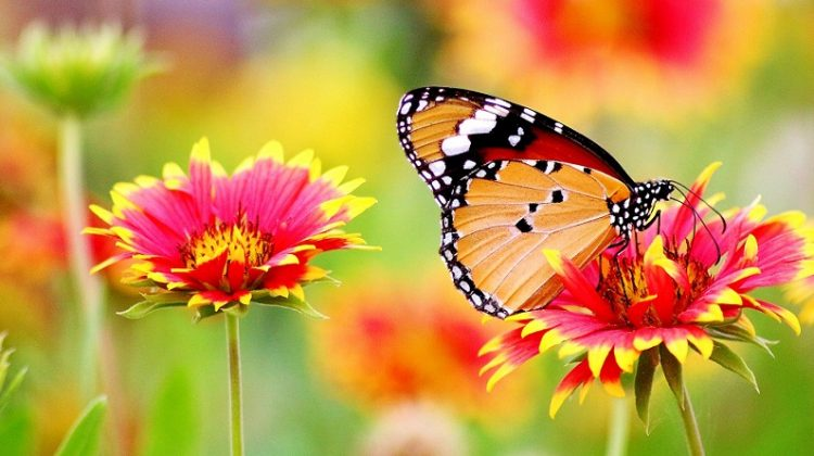 Butterfly on Flower - Gardeners