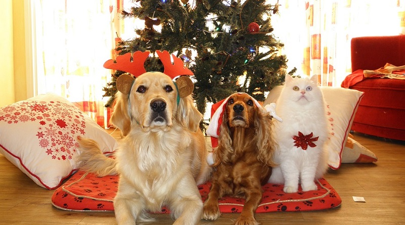 Pets in front of Christmas Tree - 2019 Holiday Gift Guide - Gifts for Pets and Pet Lovers