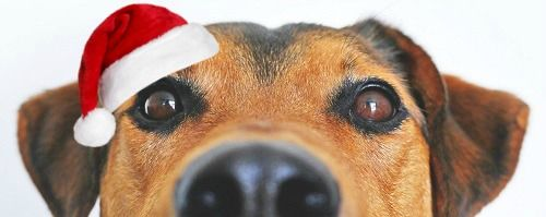 2019 Holiday Gift Guide - Gifts for Pets and Pet Lovers