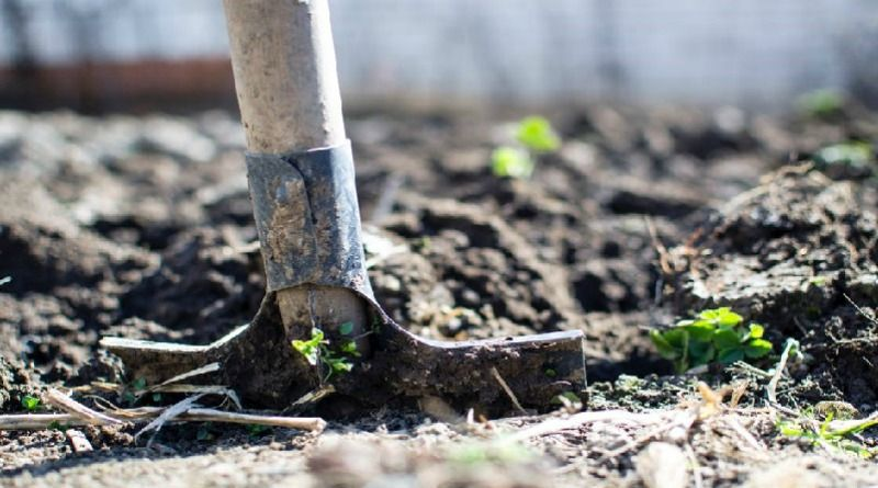 Shovel in dirt - The Top Backyard Farming Tips for Great Homegrown Organics