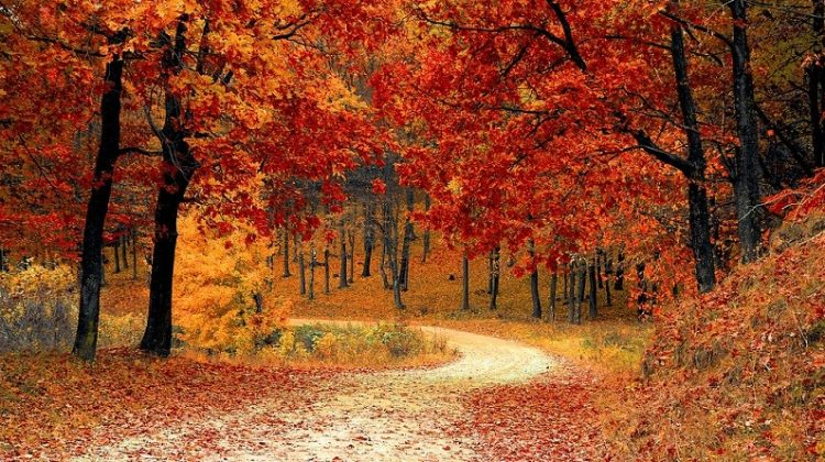 Fall Trees - 4 US Regions to Visit this Fall