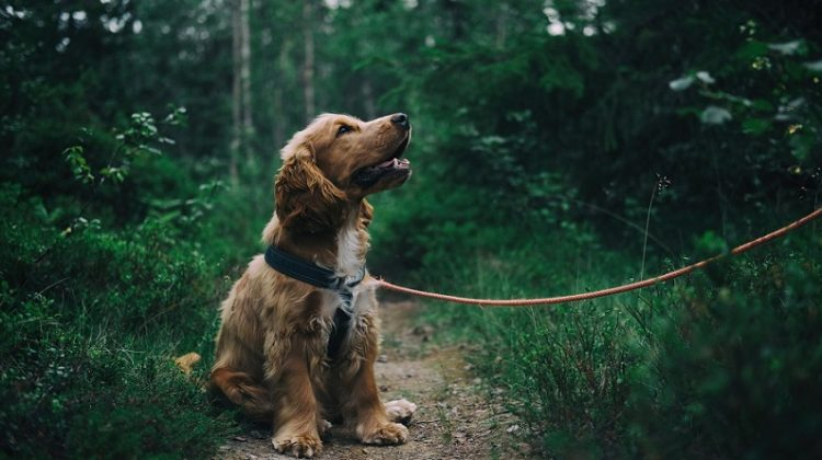Puppy on Leash - 4 Things Your Home Needs Before You Get A Dog