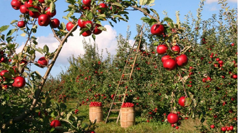 Small Apple Orchard - 9 Profitable Crops for Small Farms
