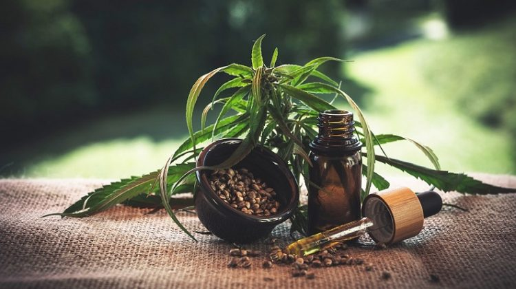 Cannabis Plant, and CBD Tincture - Cannabinoids