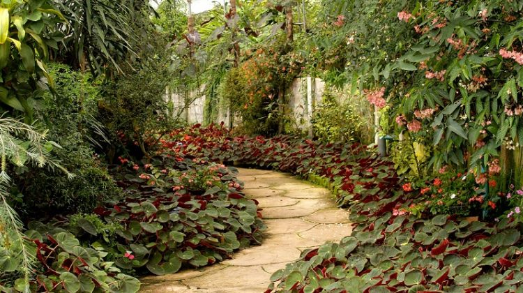 Backyard Garden with Winding Path - Stunning Gardens and Beautiful Homes