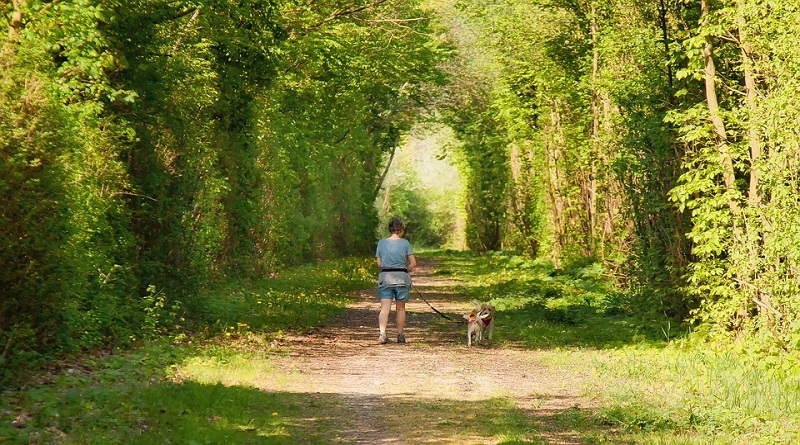 Woman Waking Dogs Down Wide Country Path - Walk Your Dog