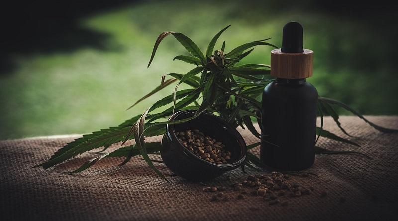 Marijuana Plant and CBD Oil - Will CBD Get you High?