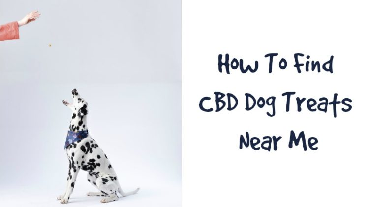 Dalmation Dog Getting a Treat - CBD Dog Treats