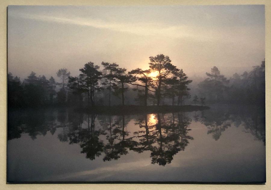 Enchanting Mist - PHOTOWALL