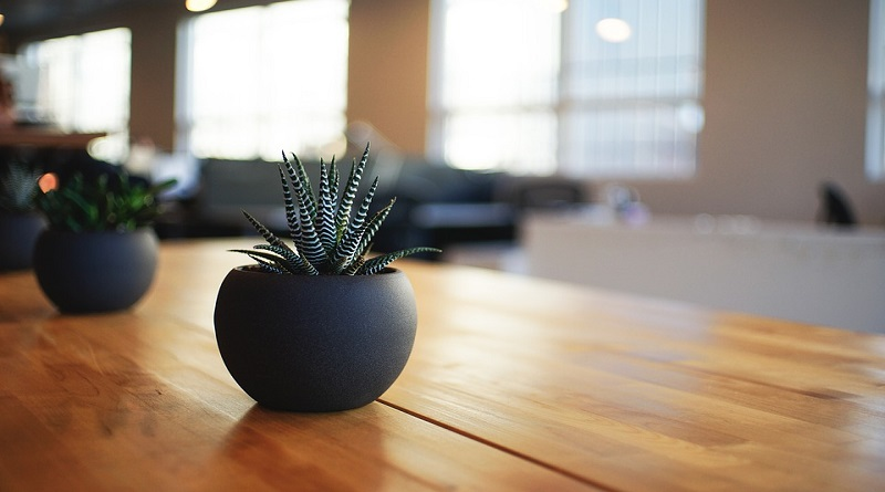 Succulent in small black pot sitting on wooden table - Bringing The Outdoors Indoors