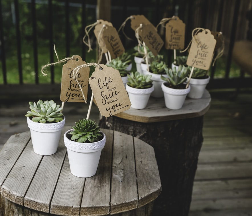 Succulents in small white pots - Decorative Ideas For Your Garden Decking