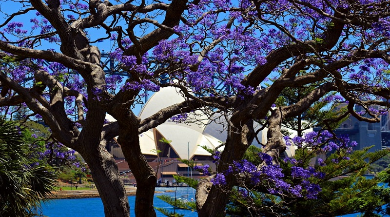 View of the Sydney Opera House from the Royal Botanical Gardens Sydney in Autumn