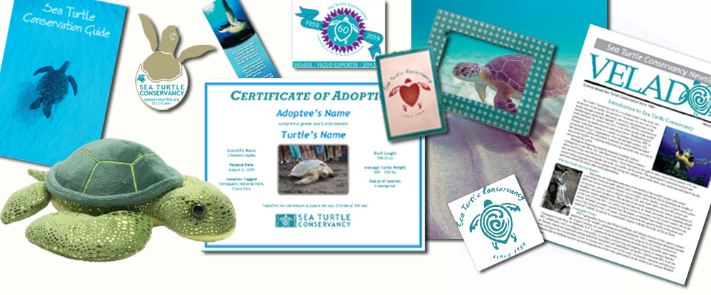 Adopt a Sea Turtle Kit - 2020 Mother's Day Gift Guide Page