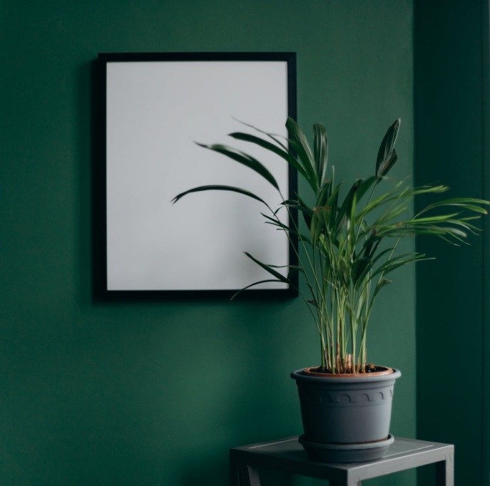 Plant on table in front of dark green wall - Interior Decor Trends