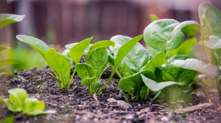 Small Growing edible plants - Eco Lifestyle
