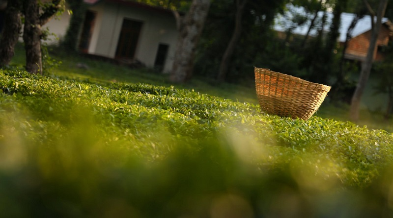 Wicker Basked on Lush Green Lawn - Simplify Your Lawn Care