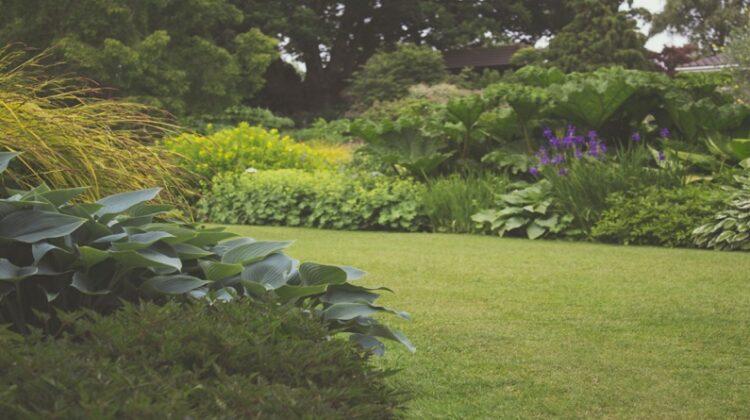 Beautiful Lush Lawn in back yard