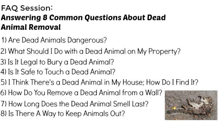Dead Animal - Dead Animal Removal