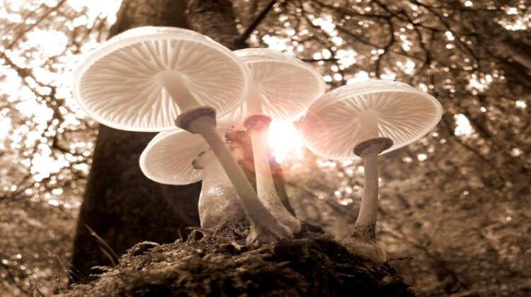Mushrooms growing in the woods - Health Benefits of Medicinal Mushrooms