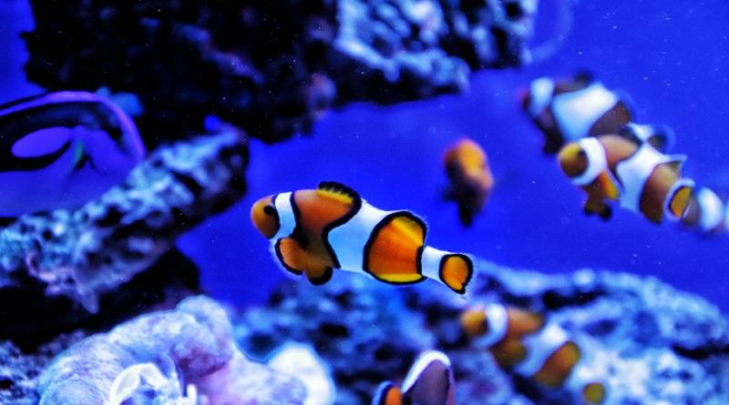 Salt Water Fish in Aquarium - Beginner's Guide to Building an Aquarium