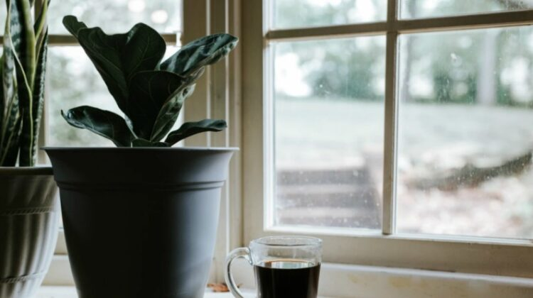 Plant and cup of Coffee in front of Bay Window - How to Replace Fitted Windows