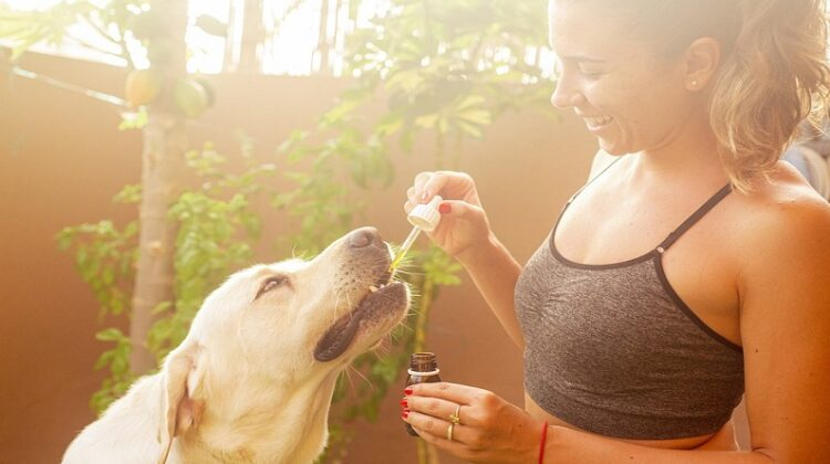 Giving a dog CBD Oil
